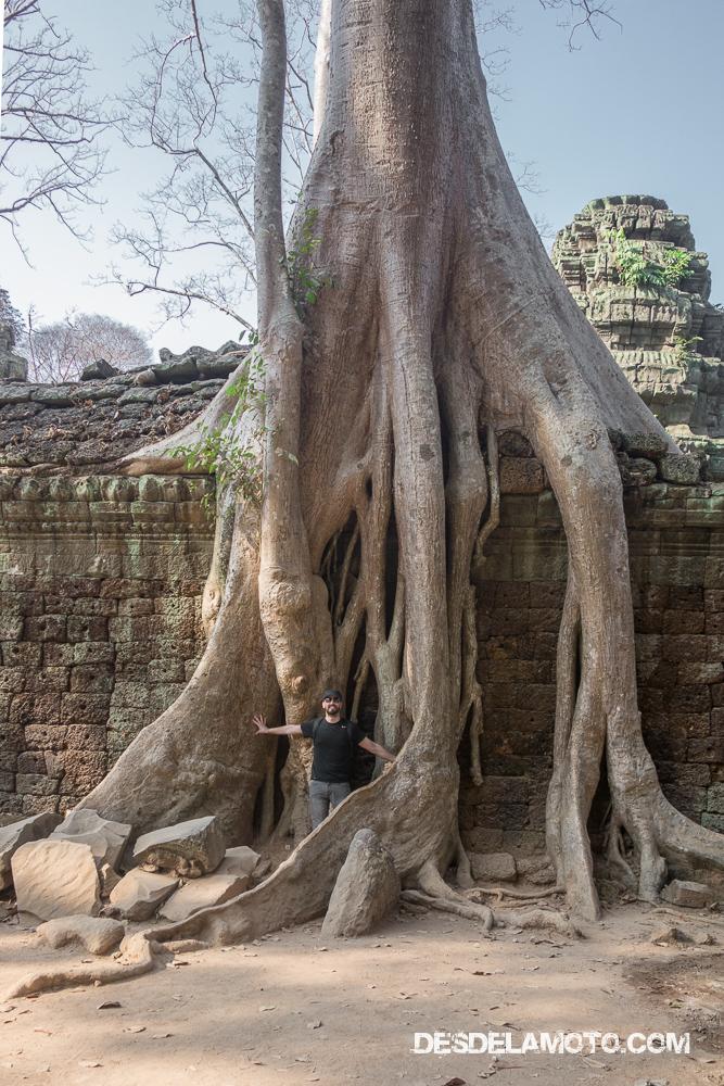 Construcciones abrazadas por la naturaleza, Angkor.
